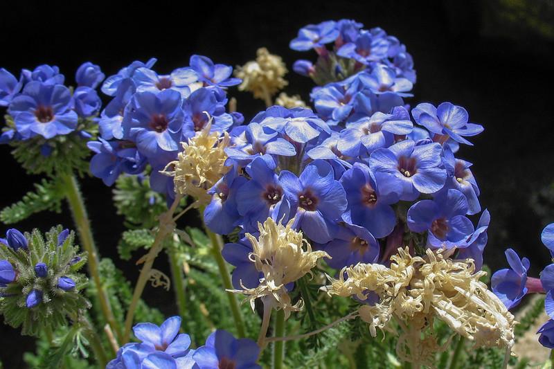 This plant love high altitudes or arctic regions.