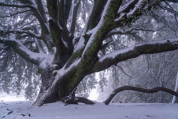 Bent Branches