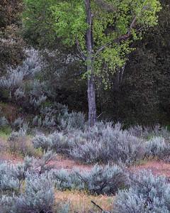 Rattlesnake Meadows