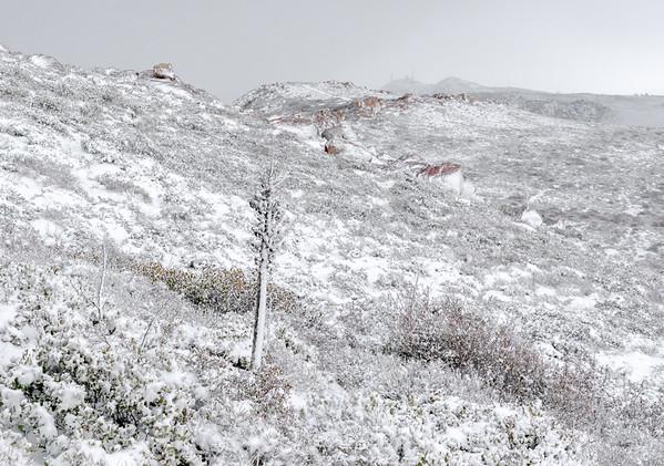 Snow Coated Desert