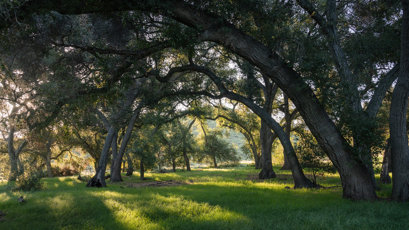 Arch of Oaks