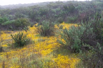 California Goldfields 2