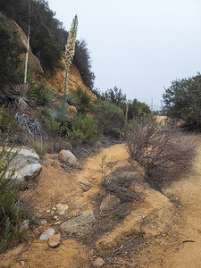 Chaparral Yucca & Trail