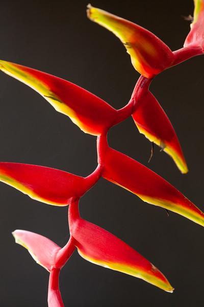 Marginata flowers