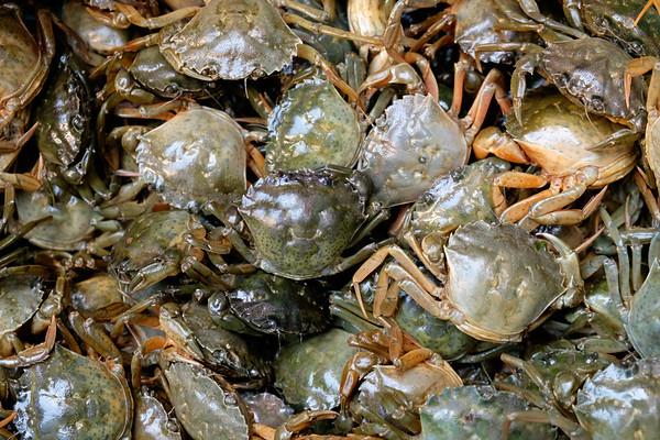 Moleche soft shell crabs