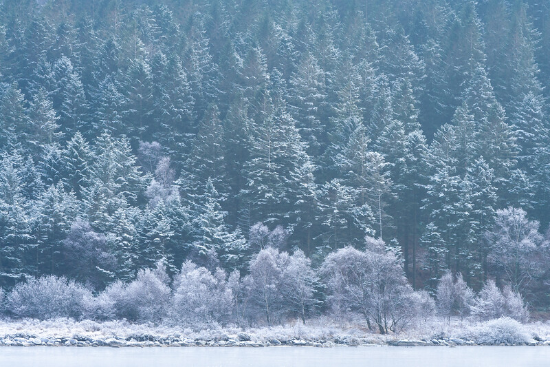 Frosted Trees, Snowdonia