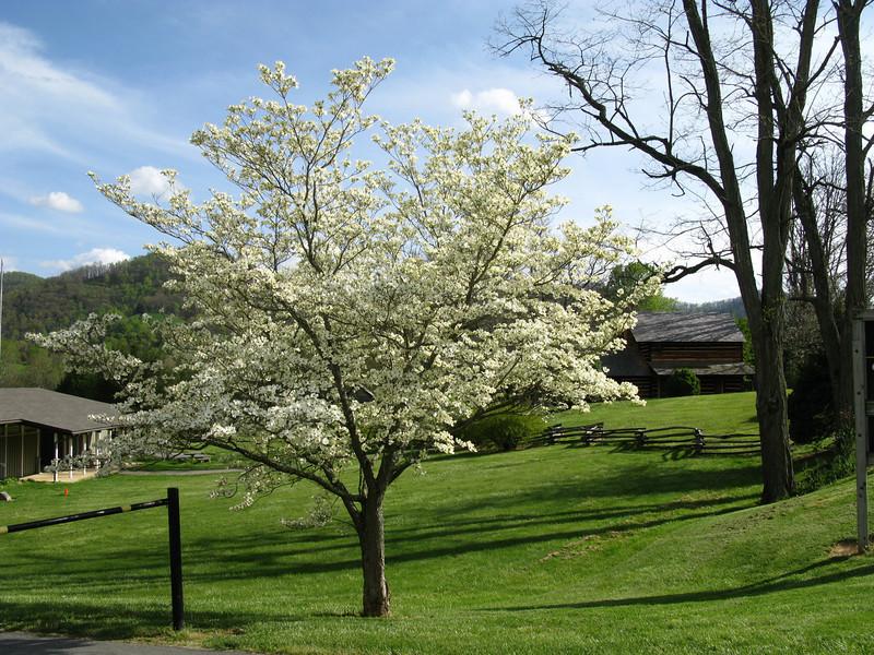 Zebulon Vance birthplace<br /> Weaverville, NC<br /> April 23, 2008  UNC Asheville Botanical Garden April 27, 2008