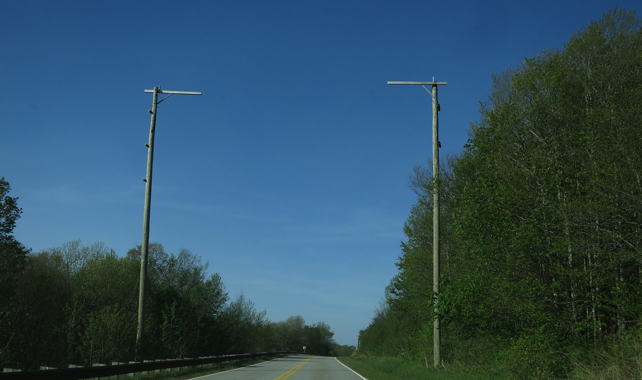 Would you believe that these are put there for the flying squirels to cross the highway safely? I didn't think so.
