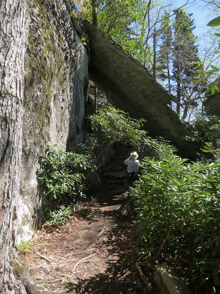 We came for this view because we took a favorite trail photo here years ago. Unfortunately a rhododendron has grown up to block the view of the trail going under the rock and the lighting was too harsh for photography..