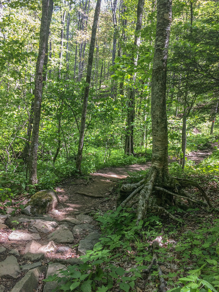 Beautiful trail through the hardwoods