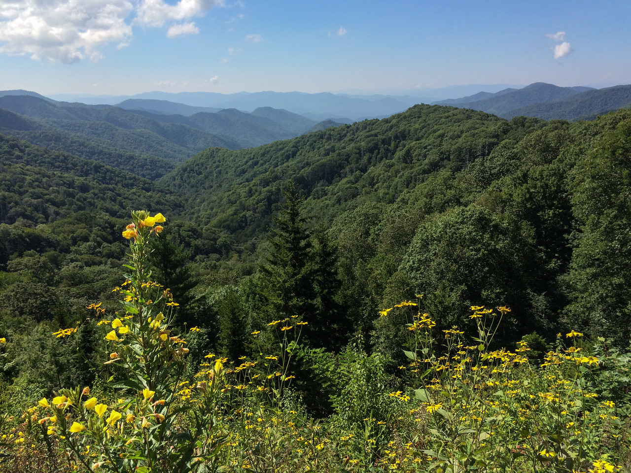 View from the boardwalk on Newfound Gap Road