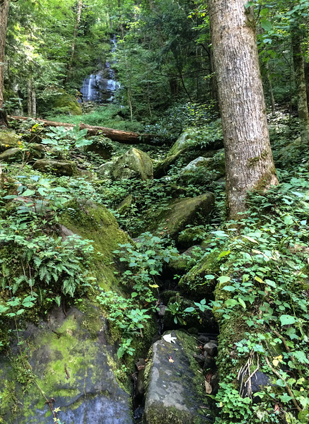 Fern Branch Falls was underwhelming. The hike to it would be spectacular in wildflower season.