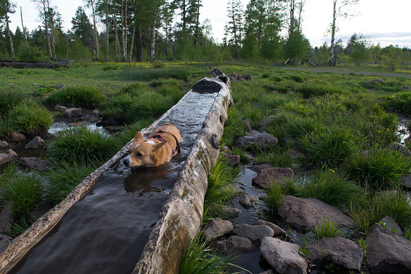 Currier Springs Horse Camp with the cascading horse trough, or corgi swimming hole.
