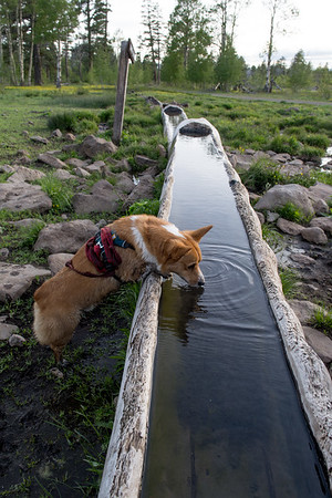 Griffin using the trough for its intended purpose.