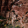 Zion National Park - Angels Landing