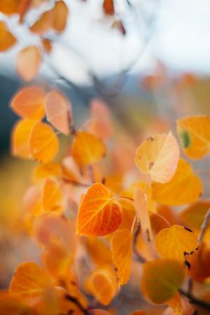Sierra Eastside Fall 2018