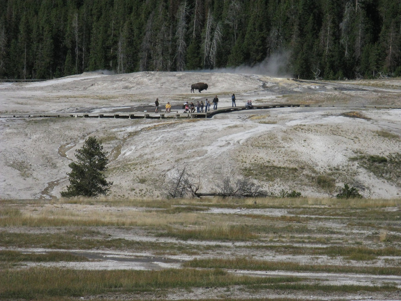 We drove over to Old Faithful village to see about possibly getting indoor lodging. Nope - everything in the Park was booked .. except a few campgrounds.
