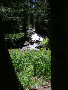This is from our camp - the view between two trees at the nearby cascade of E. Cross Crk.