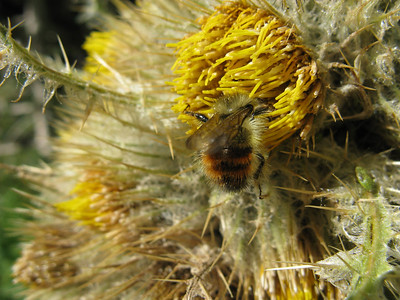 Is the flower devouring the bee ...