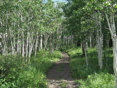Lots of aspen groves on the way to Thomas Lakes.