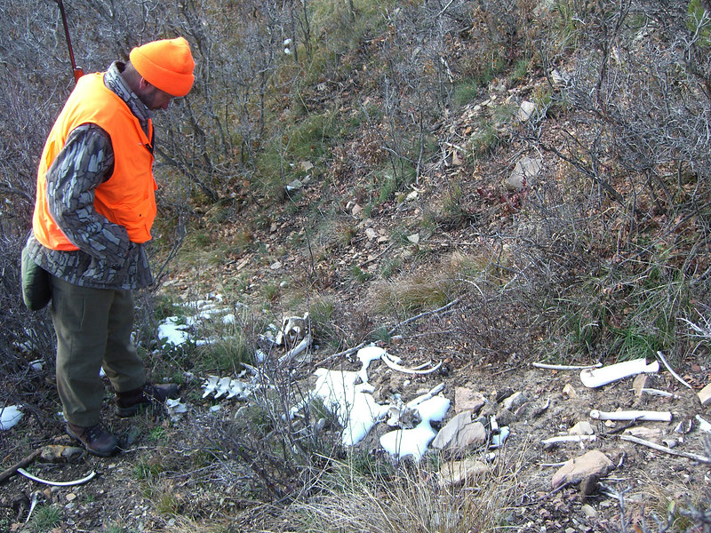 Checking out the carcass of Rick's kill last year.