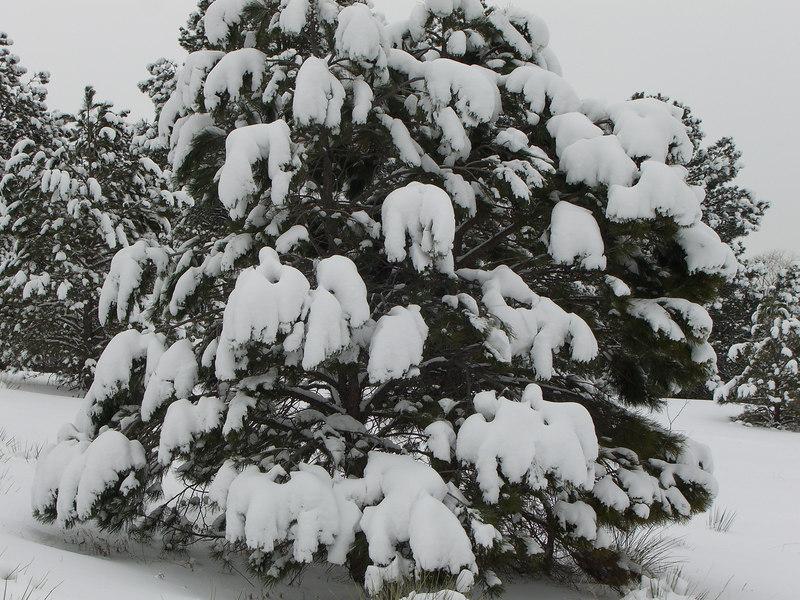 HEAVY Christmas tree ornamentation.
