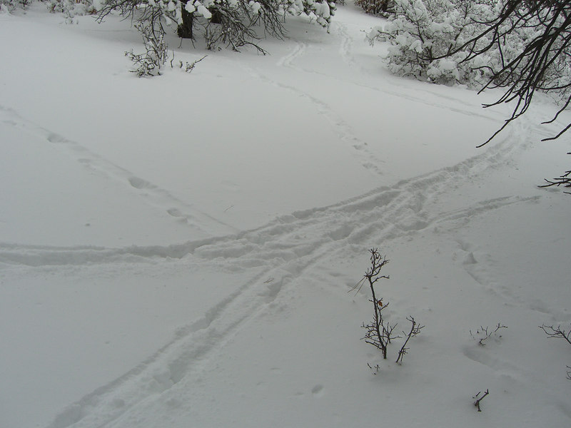 These are (non-human) animal tracks at a busy off-trail intersection.