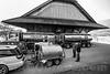 Milchsammelstelle<br /> <br /> Wer heute Viehzucht betreibt, kann sich nicht mehr nur auf äussere Eindrücke verlassen. Für eine erfolgreiche Zucht ist, neben einem noch immer notwendigen «Gespür», die Kenntnis verschiedenster, den Zuchterfolg beeinflussender Merkmale unverzichtbar. Dazu gehört, neben der Milchmenge, auch die Milchqualität. Seit den frühen 1920er Jahren wurden von den Zuchtviehverbänden, zuerst noch freiwillig, Milchmessungen angeboten. Heute sind diese, für alle einem Zuchtverband angeschlossenen Milchwirtschaftsbetriebe, Pflicht. Jeden Monat Jahr besucht der vom Verband angestellte und geschulte Milchmesser die Betriebe, um die Tagesmilchmenge jeder Kuh zu messen und von jeder Kuh eine Milchprobe zu entnehmen. Aus diesen wird dann in entsprechend eingerichteten Laboratorien der Gehalt an Milchfett und Eiweiss bestimmt und die Zellzahl gemessen. Alle diese Massnahmen helfen, qualitativ hochwertige Milch abzuliefern, die an den Milchsammelstellen von den jeweiligen Milchhandelsorganisationen mit ihren Tankfahrzeugen abgeholt wird © Patrick Lüthy/IMAGOpress.com / Text: Max Misteli