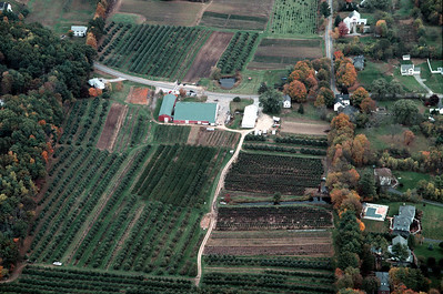 Lots of variety in this image, on the left behind the farm stand (bottom left) are apple trees used for the fresh pressed cider that is squeezed and bottled in the large building with the green roof.  Across the road on the upper left are the U-Pick apples clearly marked with the type they are in each row.  In the upper center the bars of soft small green plants are strawberries, as well as the similar looking planting along adams on the right.  The roadway in the center of the image on the back side (closest to the bottom) has Grapes, Then cherries on the left side of the farm road.  On the right hand side are raspberries and blueberries along with other plantings for the farm stand.  This area also has peaches, plums and other skinless types of fruit.