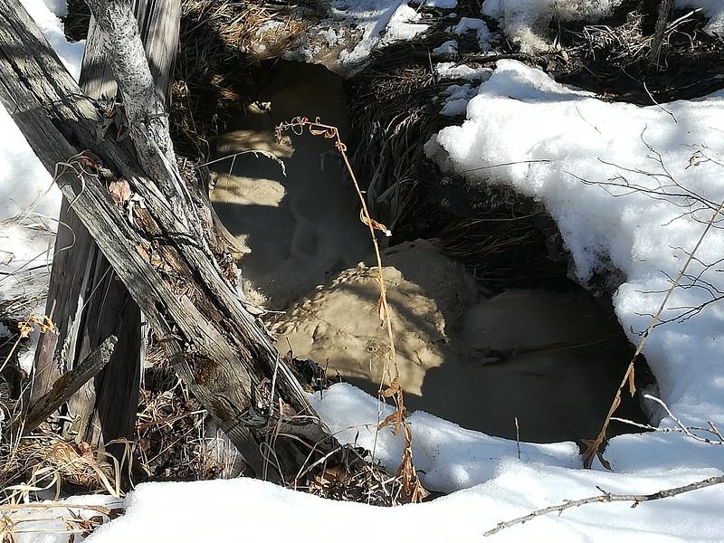 Date April 19 2018 beaver pond