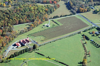 Horton Vineyards, Orange County, Virginia.  Image# 006