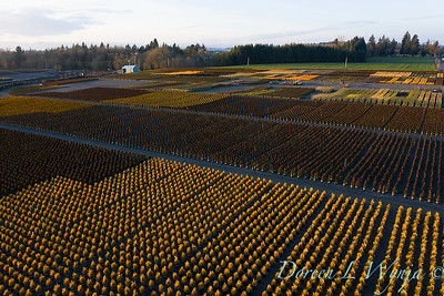 Dayon conifer section aerial_2305