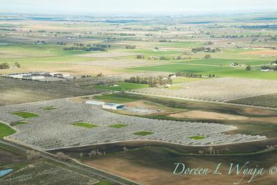 Violich Farms_8096