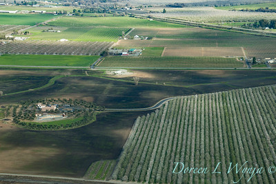 Violich Farms_8098