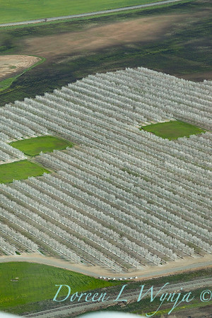 Violich Farms_8108