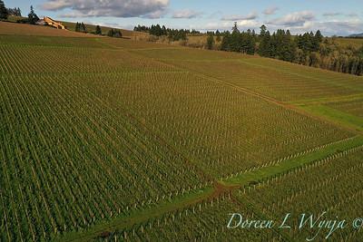 Domaine Drouhin vineyards_2130