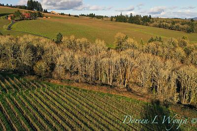 Stoneycrest Cottage vineyards - Red Ridge up to DDO_2138