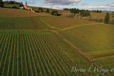 Domaine Drouhin vineyards_2132