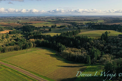 Stoneycrest Cottage vineyards - Red Ridge_2139