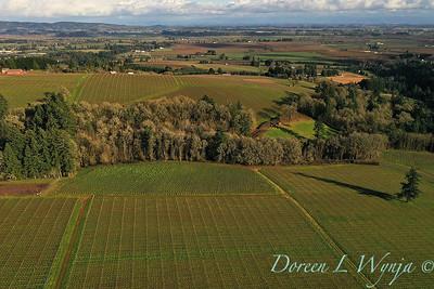 Domaine Drouhin vineyards_2133
