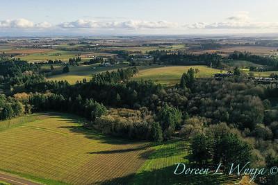 Stoneycrest Cottage vineyards - Red Ridge_2140