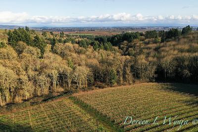 Stoneycrest Cottage vineyard - Red Ridge_2135