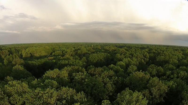 Vigo County Evening shot with trees, before a storm