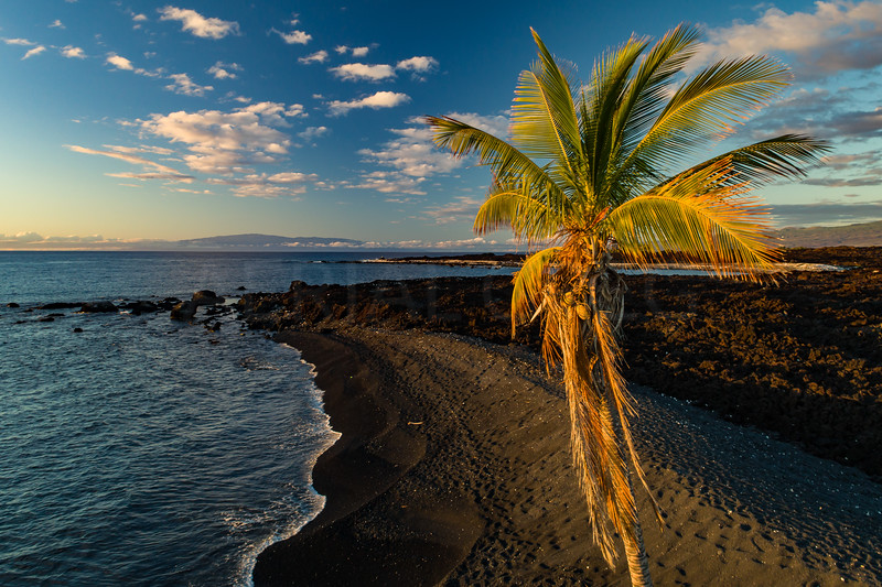 Palm Tree and Maui