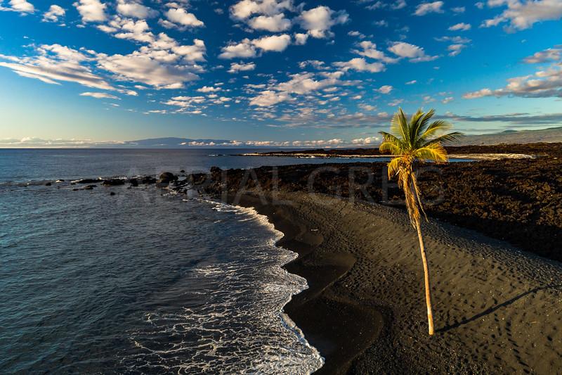 Palm Tree Coastline