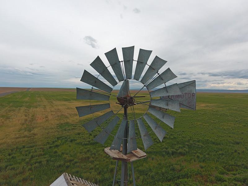 Abandoned windmill above green wheat.