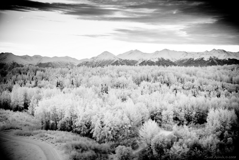 Hoar frost - Kincaid Park South of Anchorage International - Chugach Mts. in background.