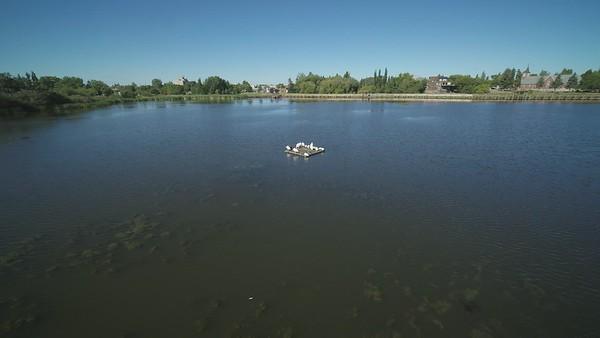 Telford Lake Pelicans