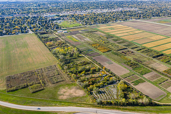 U of S Test Plots