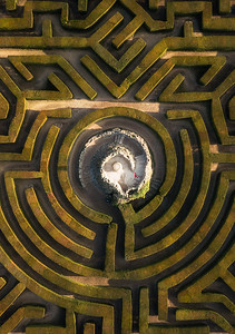 Hedge Maze, Leeds Castle, Kent, UK II
